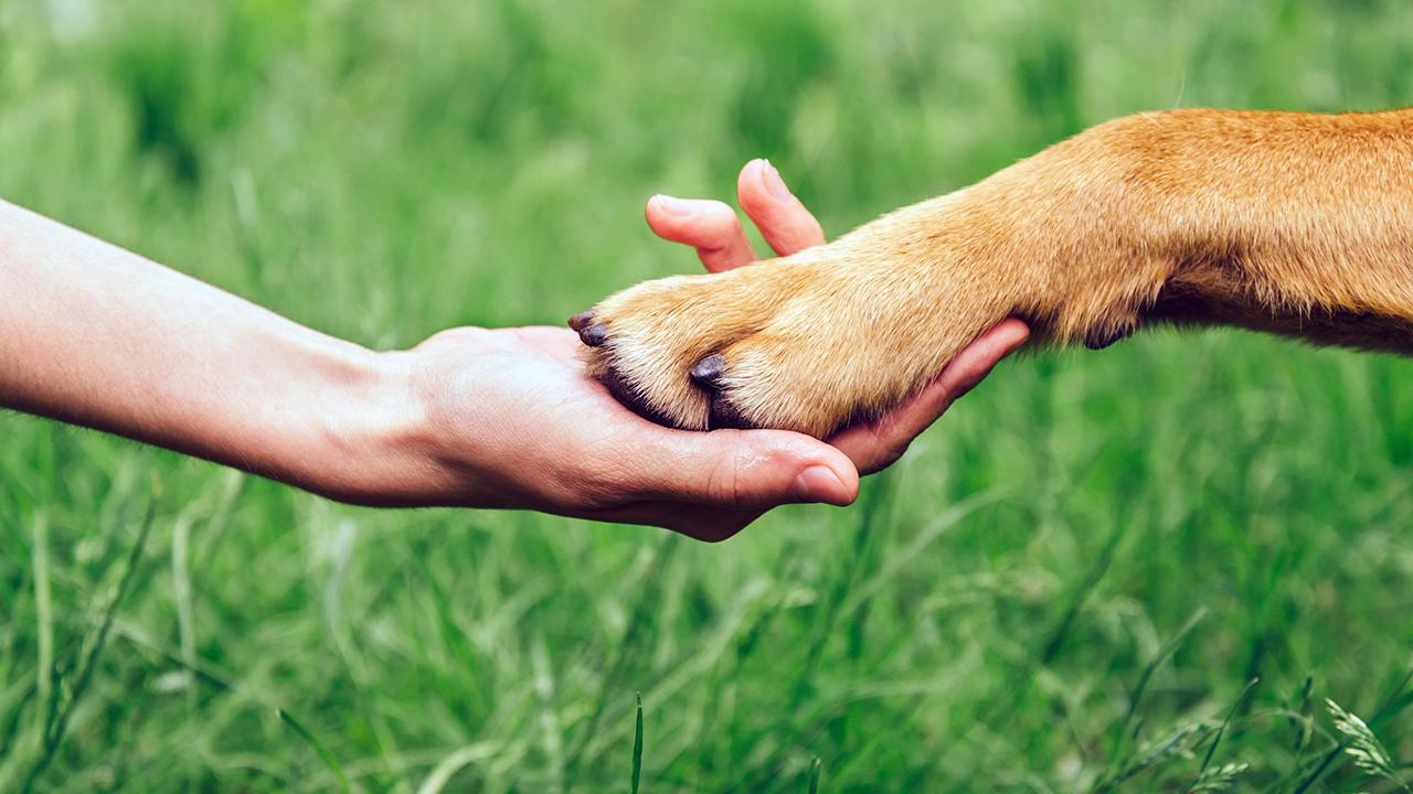 Déclaration universelles des droits de l'animal