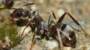 Locataires : votre logement est envahi par des insectes, que faire ?