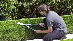 Jardin et plantation en limite de propriété, quel droit pour le voisin ?