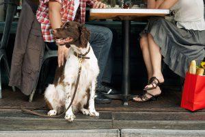 Séparation et divorce : qui garde l'animal de compagnie ?