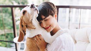 Guide des droits des animaux de compagnie