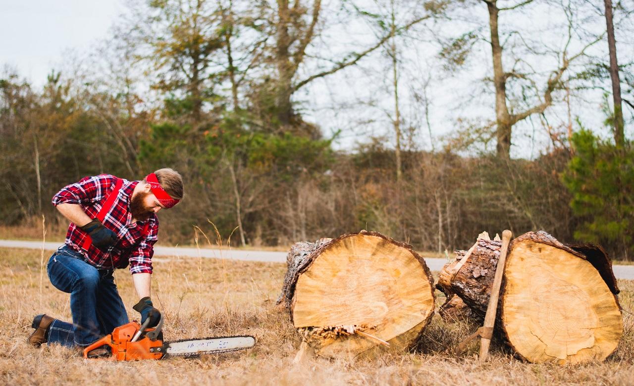 """Alt=""""Sanction abattage d'arbres sans autorisation loi"""""""